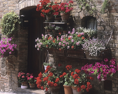 create a display of summer bedding plants garden. Black Bedroom Furniture Sets. Home Design Ideas
